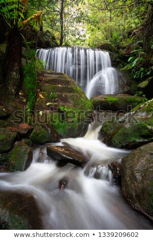 Blue Mountains Waterfalls in lush gully Photo stock © lovleah