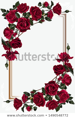 rózsa · keret · copy · space · fény · levél · ajándék - stock fotó © yo-yo-