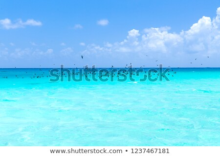 птиц Flying океана французский Полинезия путешествия Сток-фото © dolgachov
