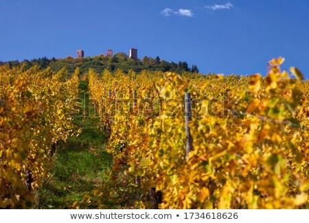 Wijnmakerij Frankrijk buitenkant huis reizen Stockfoto © borisb17