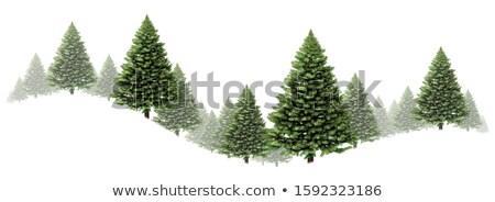 Arbre de pin tourbillon frontière hiver design groupe Photo stock © Lightsource