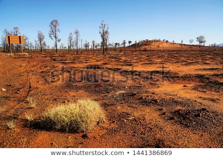 Burnt bush land after summer fires in Australia Stock photo © lovleah