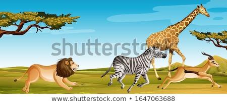 группа африканских животные работает саванна Сток-фото © bluering