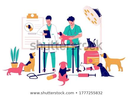Cartoon Veterinarian Treats the Cat Stock photo © Voysla