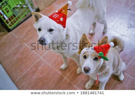 santas elf on the side of a border stock photo © aliencat