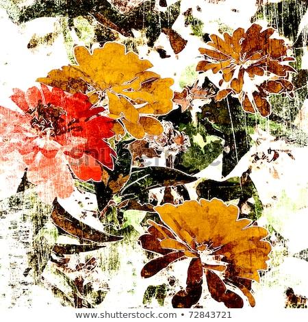 Kuru sonbahar çiçek renkli mevsimlik doğa Stok fotoğraf © Anterovium