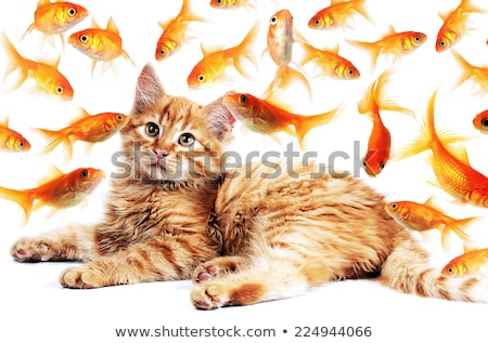 Cat fishing for goldfish Stock photo © c-foto