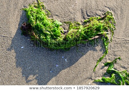 Red seaweed washed ashore on white sand Stock photo © lovleah