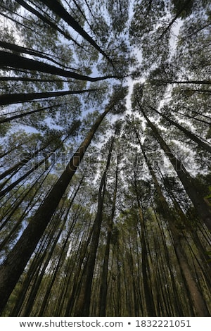 Stock photo: Old forest