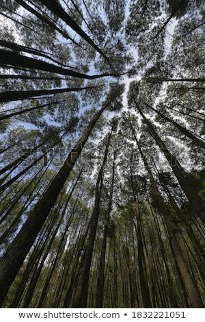 Vieux forêt vert pierres arbre fond Photo stock © Johny87