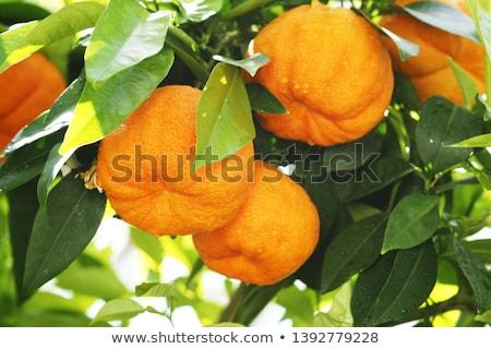 Bitter oranje muur kunst Stockfoto © gemenacom