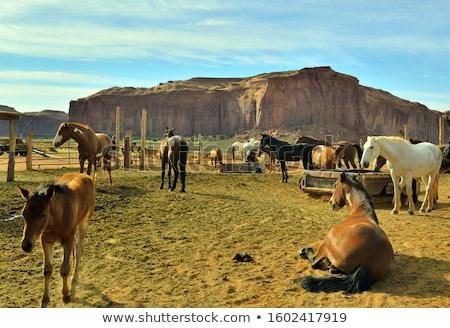 Kameel zandsteen formatie vallei reus natuur Stockfoto © meinzahn