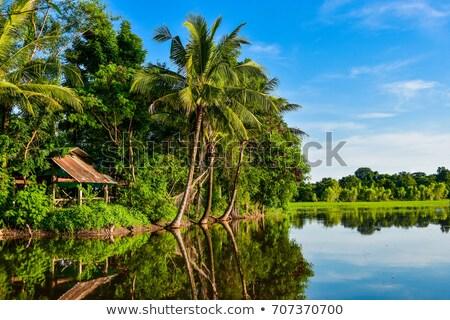 Pirinç alanları hindistan cevizi ağaçlar güneydoğu asya battaniye Stok fotoğraf © pzaxe