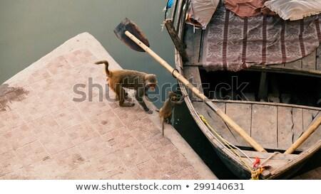 Photo stock: Deux · singes · jouer · bateau · rivière · adulte