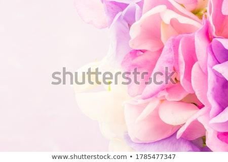 ストックフォト: ピンク · 甘い · コピースペース · 画像 · 春 · 美