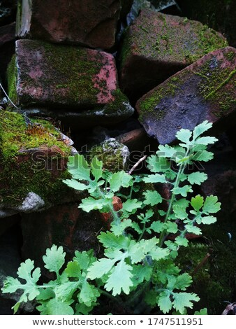Red stem moss sprout on white background Stock photo © Mps197
