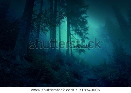 Zdjęcia stock: Piękna · lasu · noc · stylizowany · malowniczy · ilustracja