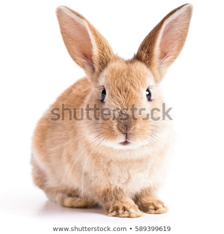 Bunny konijn landbouwer man holding handen cute Stockfoto © Nneirda