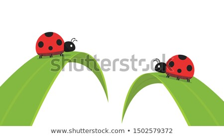 Vector Red Ladybug Stock photo © dashadima