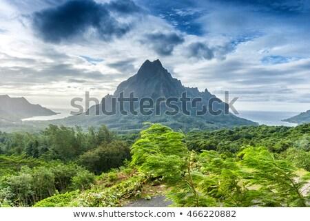 Ilha selva montanhas paisagem francês polinésia Foto stock © daboost