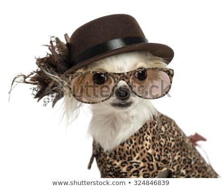 Dog wearing jewelry,  looking up Stock photo © IS2