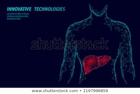 lever · infectie · menselijke · geïnfecteerde · virus · medische - stockfoto © tashatuvango