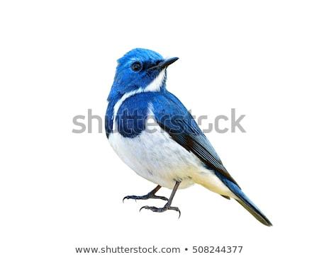 Azul aves cerveza beber comunicación Cartoon Foto stock © julientromeur