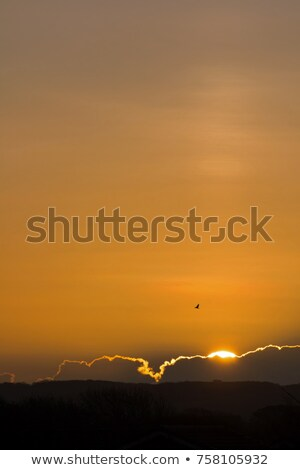 Sunrise over Friston Forest Stock photo © suerob