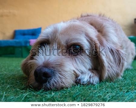 ребенка · мальчика · собака · 1 · год · играет · Beagle - Сток-фото © is2