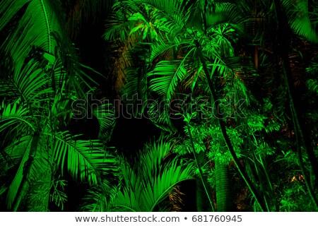 листьев ночь Бруней свет лист путешествия Сток-фото © IS2
