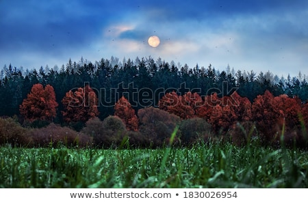 Big green trees in a forest under blue dark sky Stock photo © vapi