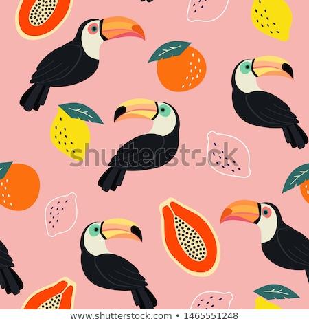 Vector naranja pico aislado blanco aves Foto stock © dashadima