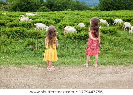 Doua caprine fermă scena ilustrare artă Imagine de stoc © bluering