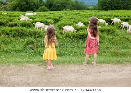 Two goats in farm scene Stock photo © bluering