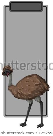 Emu on grey border Stock photo © bluering