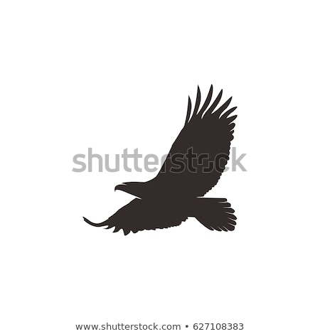 bird hawk icon illustration symbol Stock photo © blaskorizov