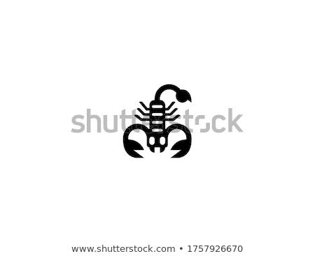 Scorpione vettore icona simbolo logo logo design Foto d'archivio © blaskorizov