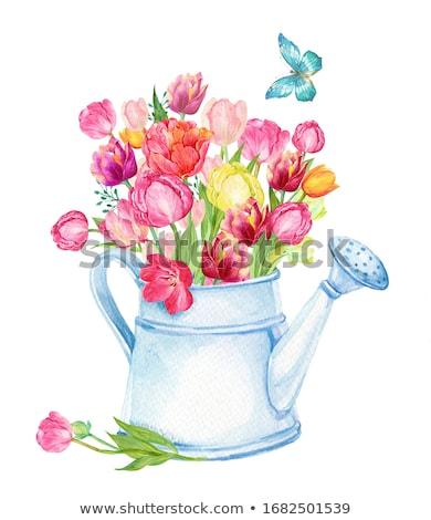 planta · lata · ilustração · cair · água · primavera - foto stock © lenm