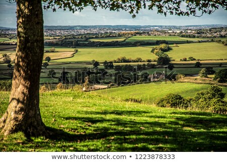 Stock photo: Natural background of green forest on a sunny day. Aerial view of the drone as a layout for your ide