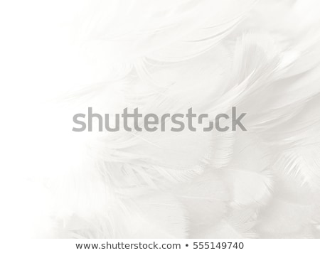 feather on white background stock photo © stoonn