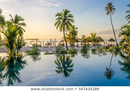 coconut on tropical beach in french polynesia Stock photo © dolgachov