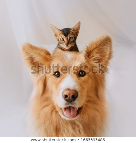 Stockfoto: An Adorable Mixed Breed Dog Playing With A Cat