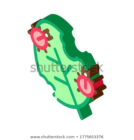 バグ 食べる 葉 アイソメトリック アイコン ベクトル ストックフォト © pikepicture