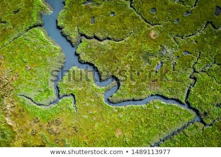 высокий трава растений воды природы Сток-фото © franky242