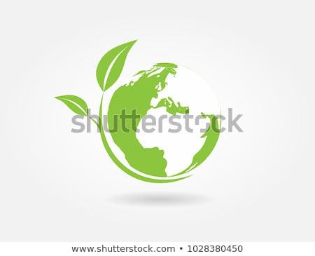 Föld levelibéka felső környezeti konzerválás fa Stock fotó © macropixel