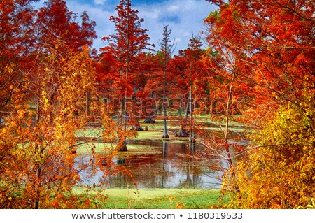 Autumn in Arkansas Stock photo © macropixel