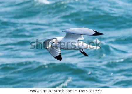鳥 湖 白 プロファイル 立って 海岸 ストックフォト © mobi68