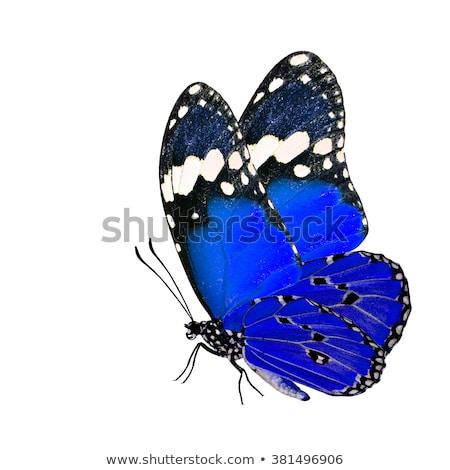 azul · borboleta · flor · natureza · corpo · planta - foto stock © davemontreuil