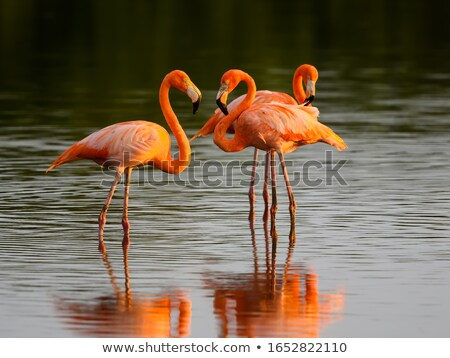 Water natuur maan vogel vogels Rood Stockfoto © hussain_al-king