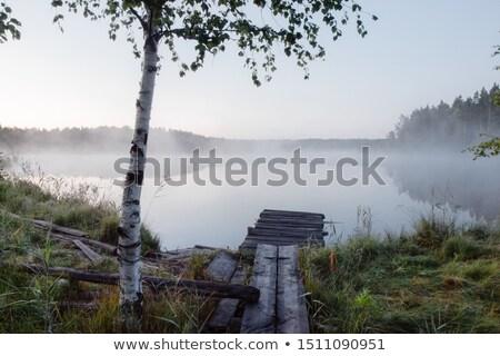 Huş ağacı ağaç mavi gökyüzü gökyüzü mavi sonbahar Stok fotoğraf © meinzahn